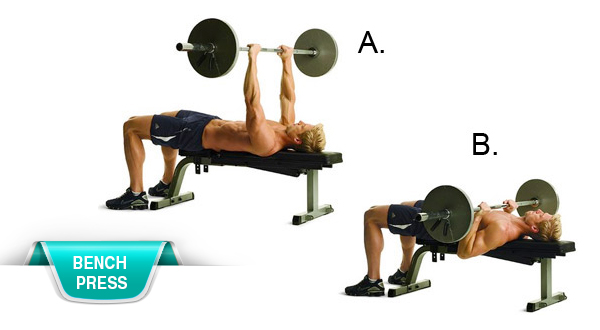 Compound Lifts - Bench Press
